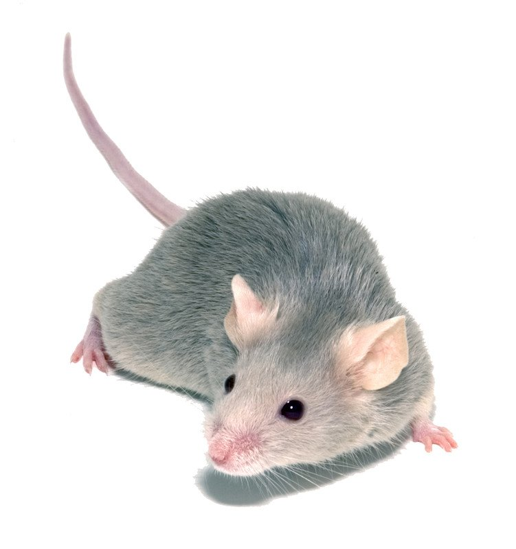 nuisance pest control removal insurance