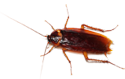 pest management insurance