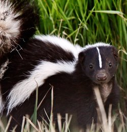 nuisance wildlife control insurance