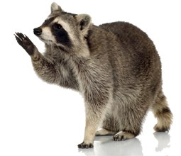 wildlife removal insurance