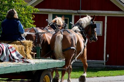 hay ride insurance