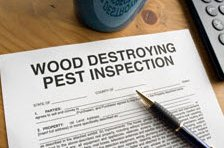 wood destroying insect insurance program